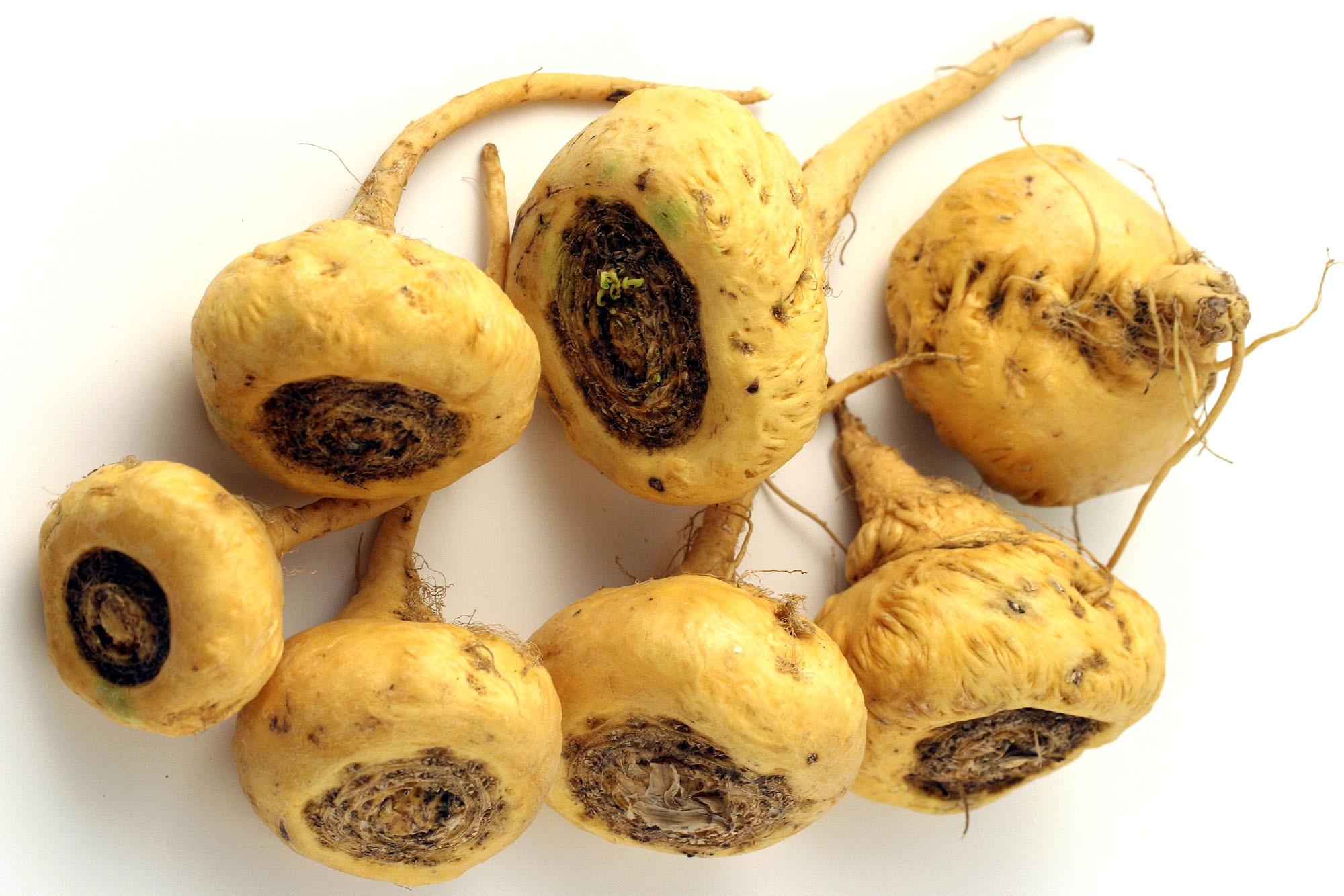 koreň maca peruánska